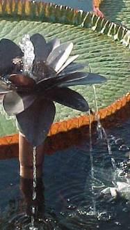 Water Gardeners International - For Beginners