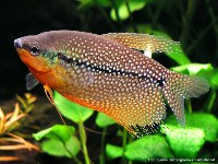 Water Gardeners International Fish For Your Pond